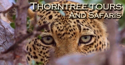 Thorn Tree Tours and Safaris